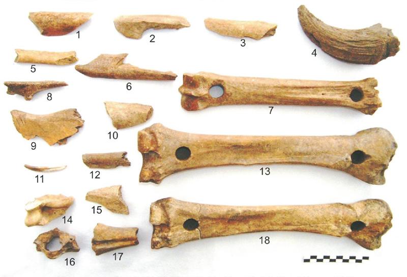 Výber z nálezov - kosti