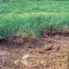 Lučenec – Tuhársky potok